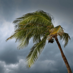 disaster restoration services in orlando